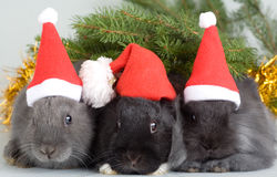 Three bunny in santa hat Royalty Free Stock Image