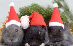 Three bunny in santa hat royalty free stock photo