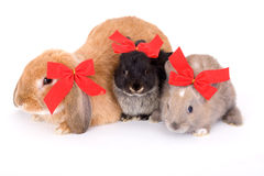 Three bunny wearing a red bow stock photo