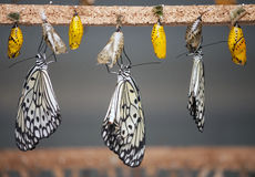 Three butterflies. Next to each other posing on blurred background Royalty Free Stock Images