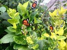 Three butterflies. Green leaves flora. stock photo