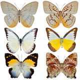 Three Butterfly Royalty Free Stock Image