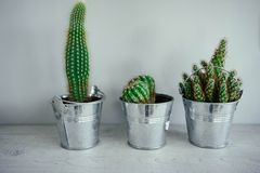 Three cacti in metal pots on a wooden table. Modern decor for ho Royalty Free Stock Photography