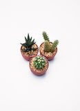 Three Cactus Royalty Free Stock Images