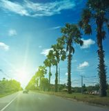 Sugar palm on the road. Three cakes of commercially produced sugar Palm is a sweetener derived from any variety of palm tree. Palm sugar is sometimes qualified royalty free stock photo