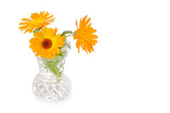 Three calendula flowers in cut-glass vase Royalty Free Stock Image