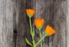Three calendula marigold flowers on old wooden plank Stock Photography