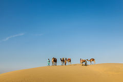 Three cameleers (camel drivers) with camels in dunes of Thar des Stock Image