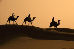 Three Camels And Jockeys Silhouetted Against The D royalty free stock photos