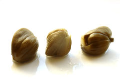 Three capers. On white background Royalty Free Stock Images