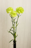 Three carnation flowers in the vase Royalty Free Stock Images