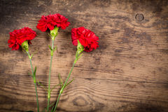 Three carnations on wooden background Stock Photography