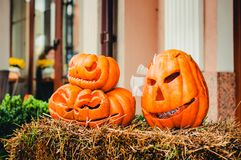 Three carved Halloween pumpkins royalty free stock image