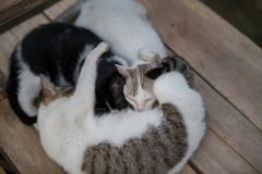 Three Cat family sleeping. Cold in the morning three Cat family sleeping together for warmth royalty free stock photos