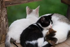 Three Cat family sleeping. Cold in the morning three Cat family sleeping together for warmth stock photo