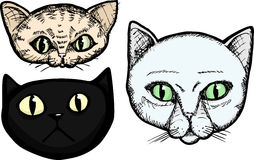 Three Cat Heads Stock Images