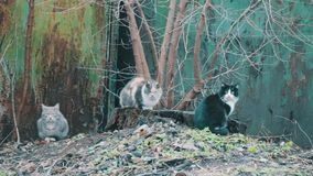 Three cat sitting on the street stock video footage