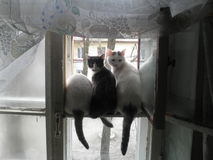 Three cat in the window Stock Images