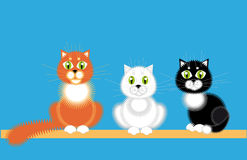Three cats. Three cat, white black and red sit together Stock Photography