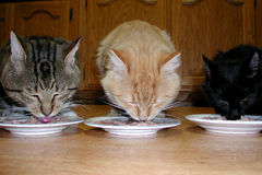 Three cats. Eating together Stock Photo
