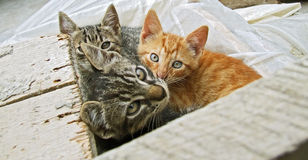 Three cats. Three little cats look at me. Zuzu and friends royalty free stock photography