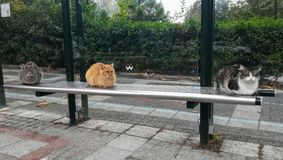 Three cats on the bus station royalty free stock image