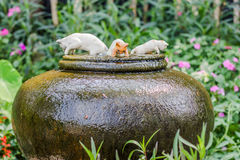 Three cats ceramic on earthenware fountain jar Royalty Free Stock Photos