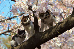 Three cats Stock Image