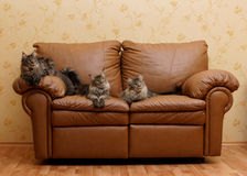 Three cats on a couch. Three cats on a brown comfortable couch Royalty Free Stock Photography