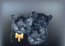 Three cats on dark Royalty Free Stock Image