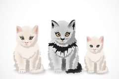 Three cats, family Stock Images