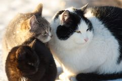 Three cats friends Stock Photo