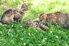 Three cats on the grass stock photography