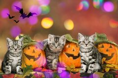 Three cats in halloween decoration Royalty Free Stock Images