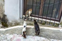 Three cats in Kotor city, Montenegro Stock Image