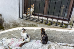 Three cats in Kotor city, Montenegro Stock Image