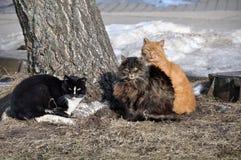 Three cats Stock Photo