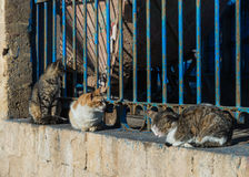 Three cats sit on the wall for sunbathe Royalty Free Stock Images