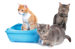 Three cats sitting beside cat litter box Stock Photos