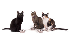 Three cats sitting next to their food bowls Royalty Free Stock Photography