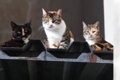 Three cats sitting on roof Royalty Free Stock Images