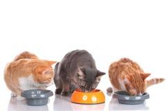 Three cats sitting at their food bowls Stock Photos