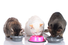 Three cats sitting at their food bowls Stock Images
