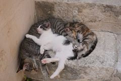 Three cats sleeping together stock photo
