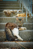 Three cats on a stairs. Vertical Royalty Free Stock Photography