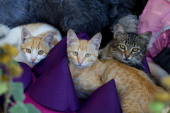 Three cats on Royalty Free Stock Images