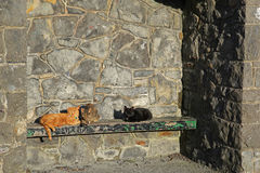 Three cats in the sun bathing. Royalty Free Stock Images