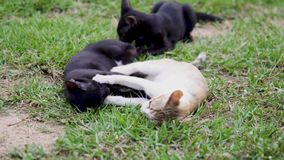 Three cats are playing on the lawn. stock video
