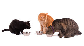 Three cats at their food bowls. One eating and two others watching her, on white Royalty Free Stock Photo