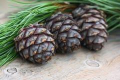 Three cedar cones and cedar branch on wooden background Stock Photo